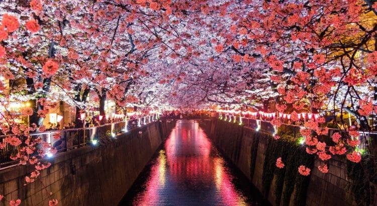 Kirschblütenallee in Nagasaki.
